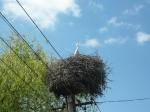 stork nest!