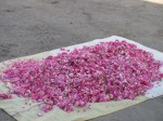 Rose petals for sale in a mountain village near Tabriz