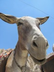A cute donkey in Kandovan