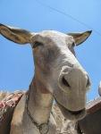 A cute donkey in Kandovan