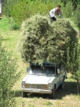 New game - how much can you fit in a Paykan pick-up before it keels over?! quite alot apparently!