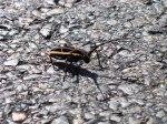 The final moments of a big beetle. Moments after taking this, it was squashed by a car!