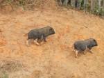 Cute piglets!