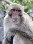 Monkey on Monkey Island.